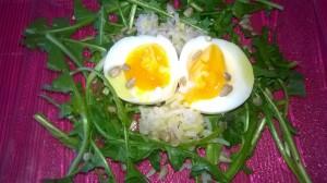 salade de pissenlit 2
